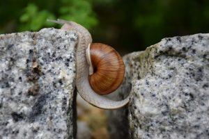 Snail moving across a gap of granite
