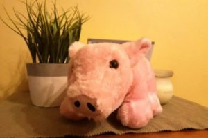 pink soft toy pig on shelf with plant