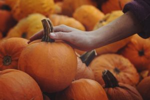 hand reaches for pumpkins